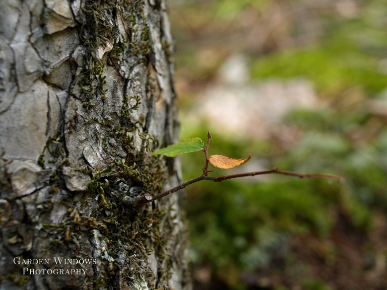 Leaves for Gnomes by Garden Windows Photography