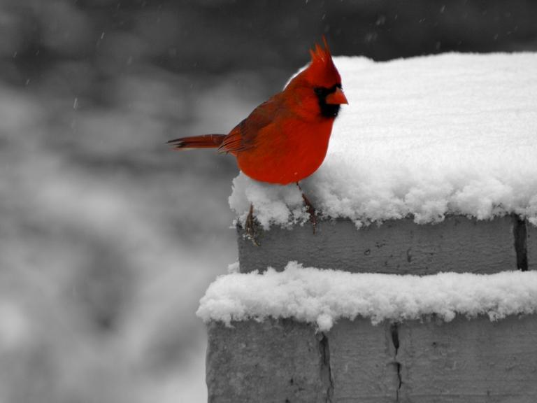 Snow ~ Garden Windows Photography