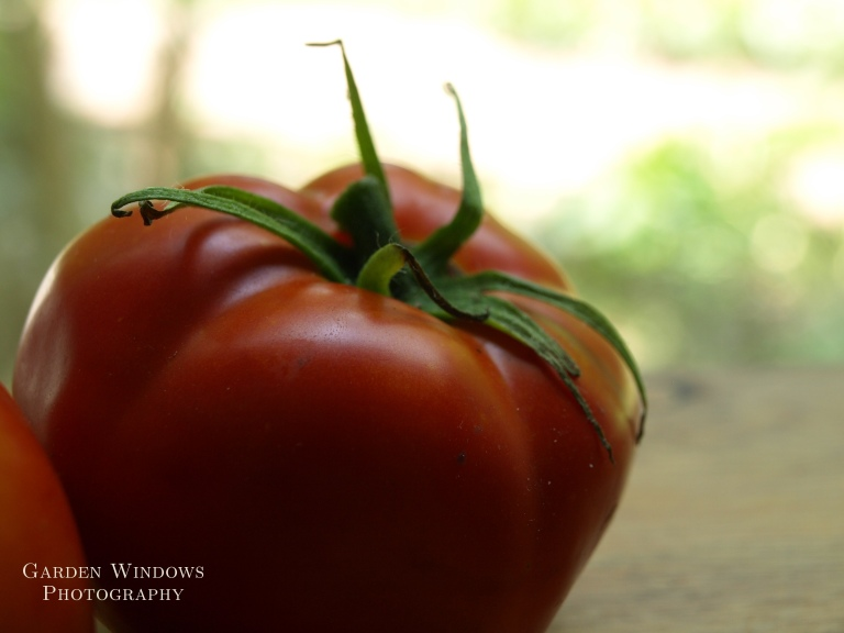 Tomato #1 by Garden Windows Photography
