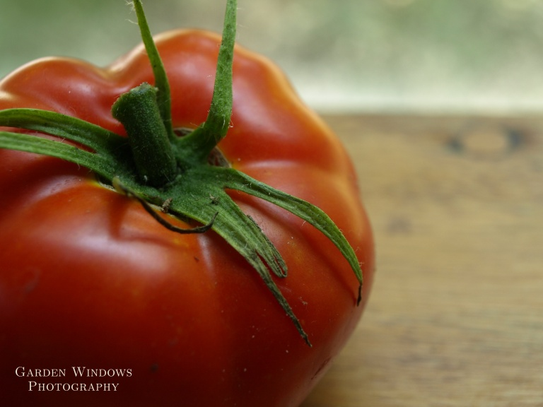 Tomato #2 by Garden Windows Photography
