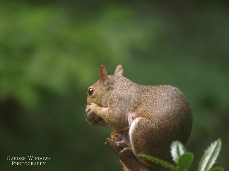 My Nut #1 by Garden Windows Photography