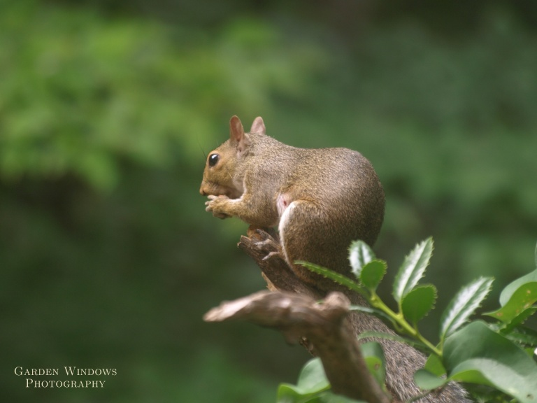 My Nut #2 by Garden Windows Photography