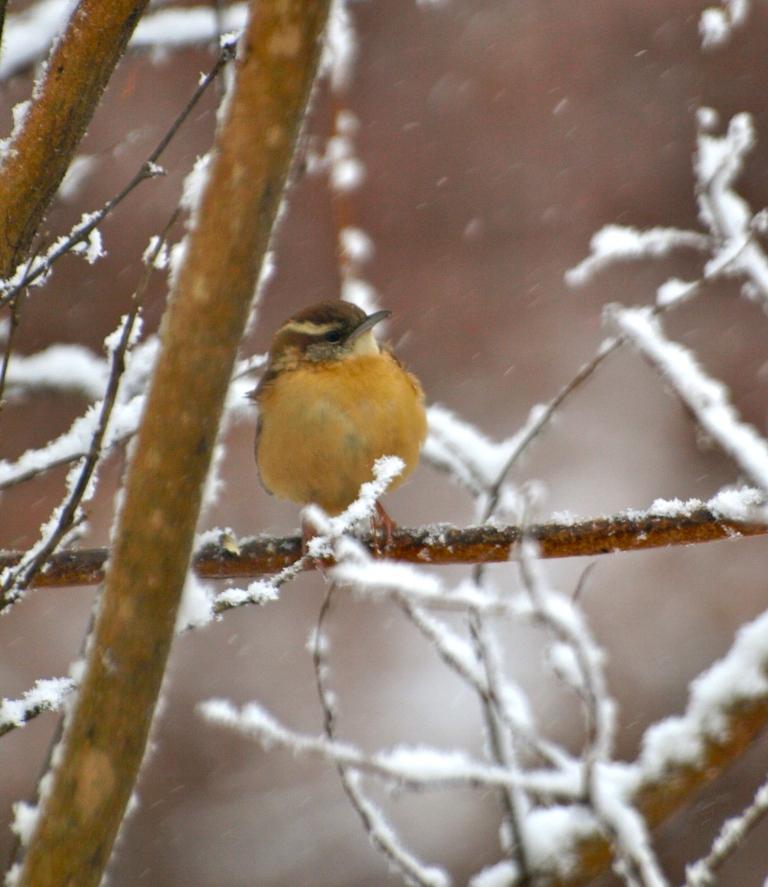 Brrr by Garden Windows Photography