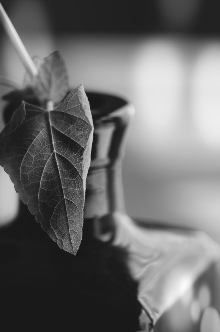 Garden Windows Photography // Melissa LeGette