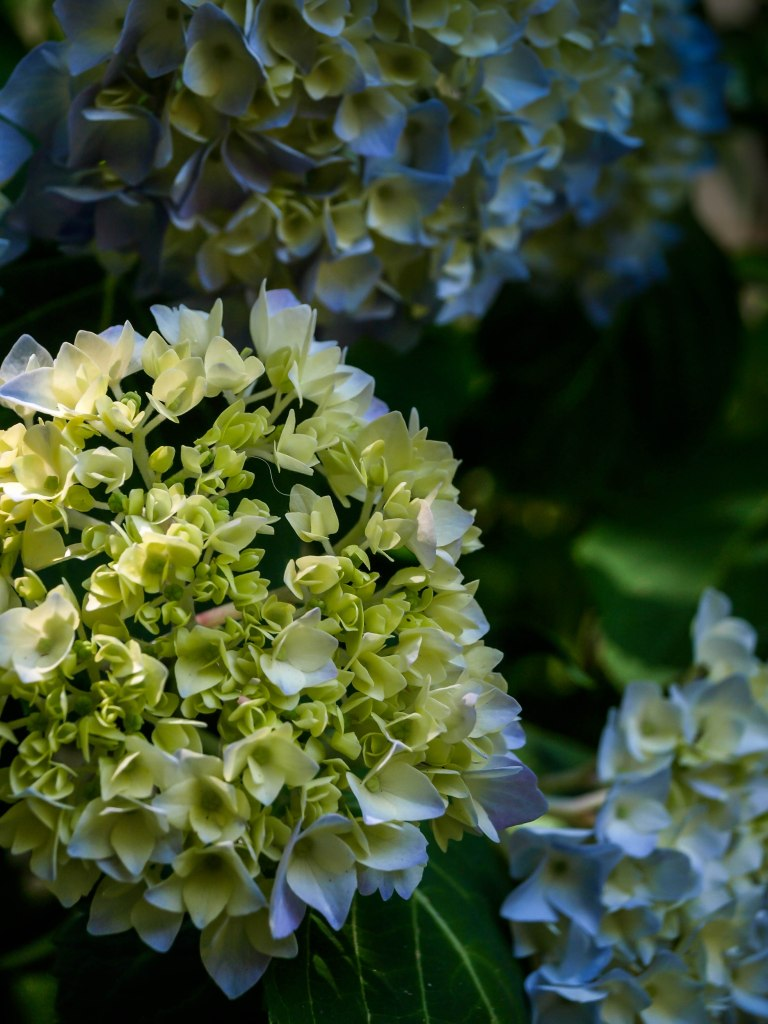 Bouquet for Marian // Garden Windows Photography